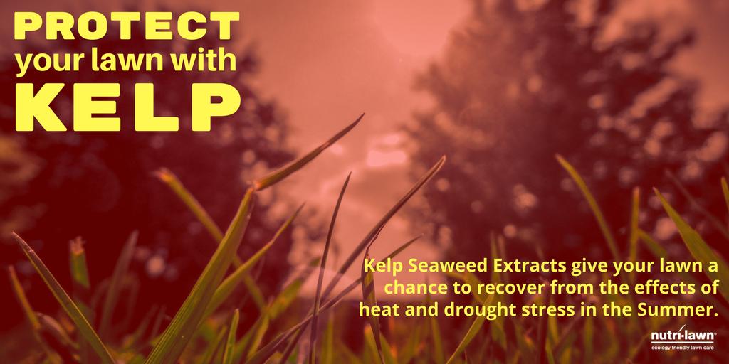 kelp-tip-t.png