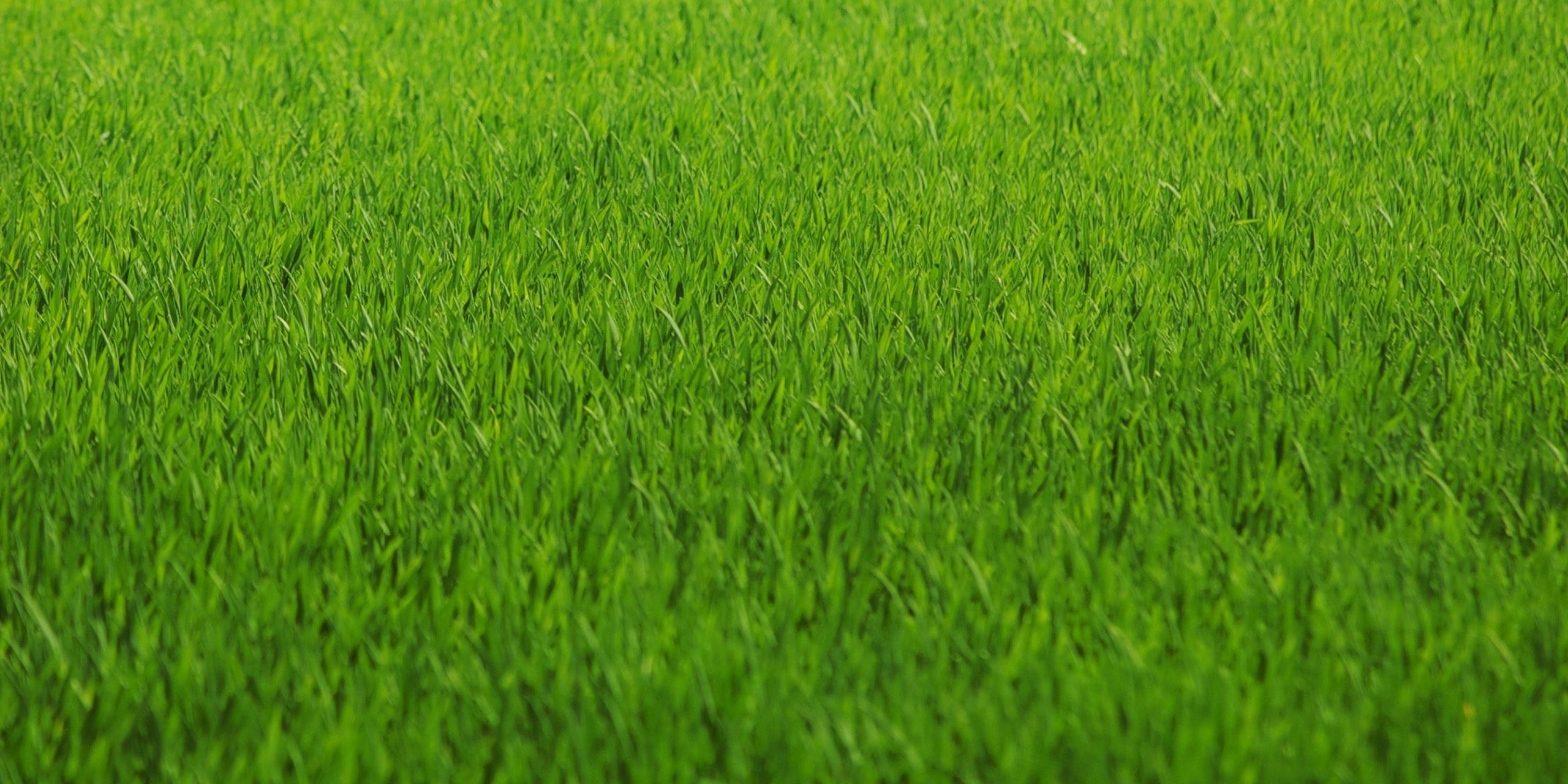 landscape-staging-lawn.jpg