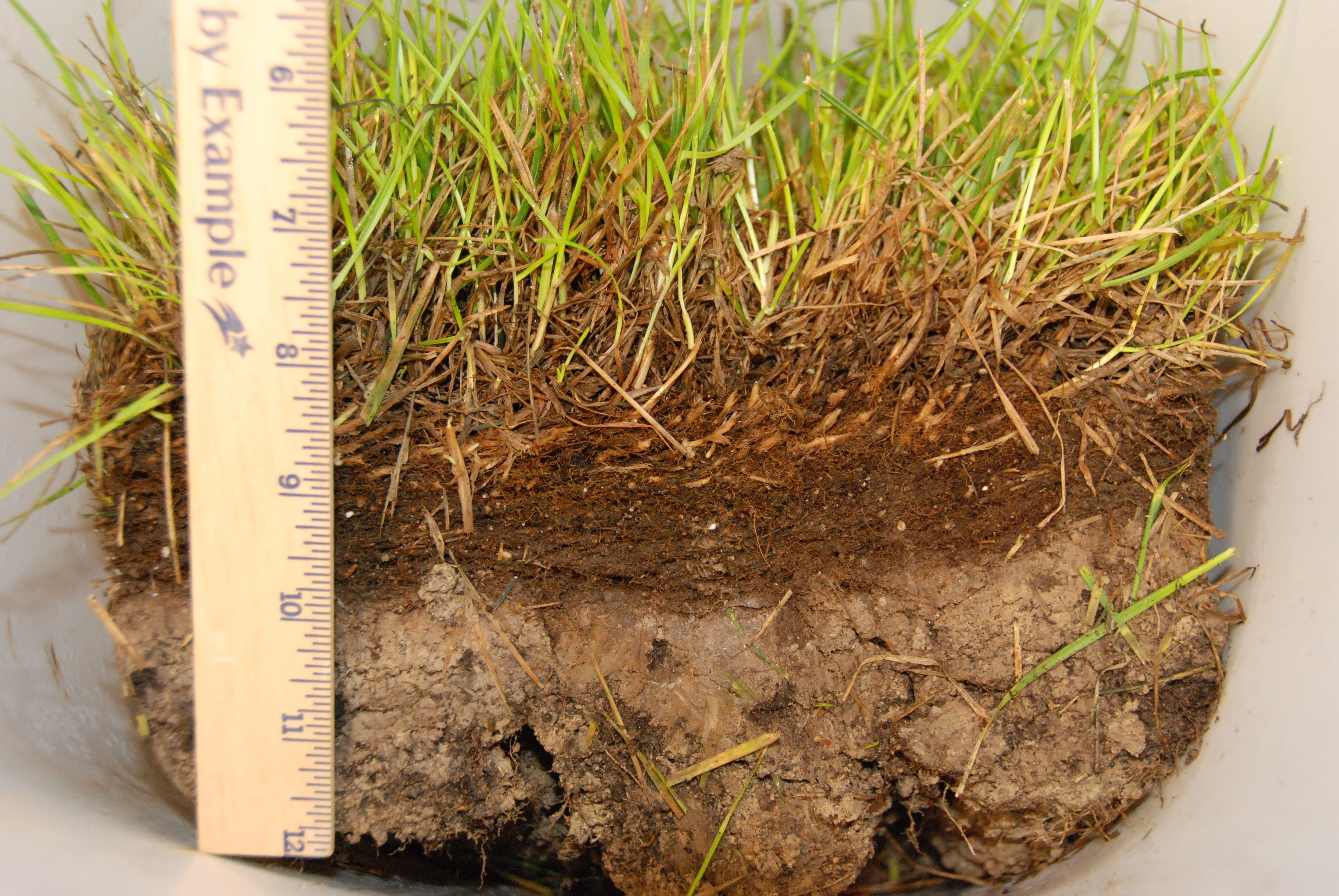 Aeration also helps remove excessive thatch from your lawn.