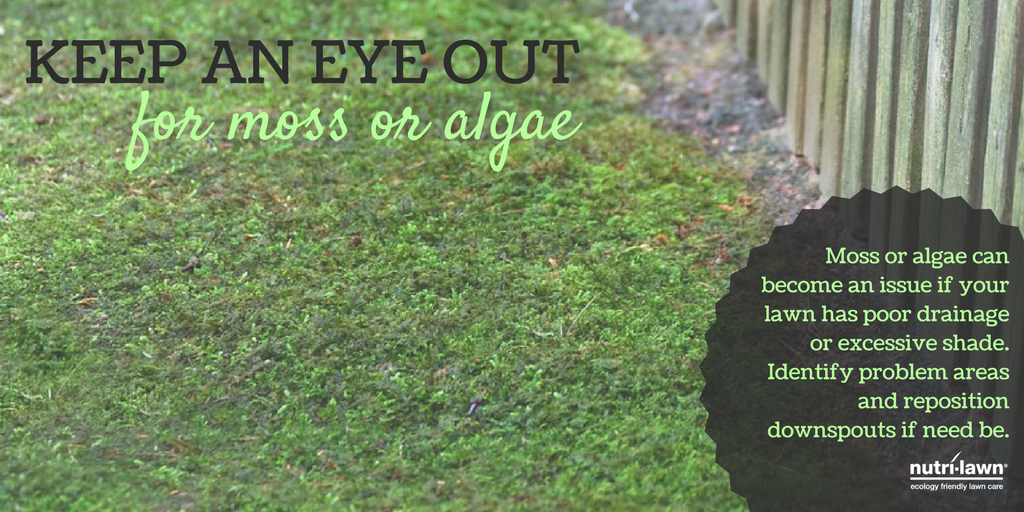 Keep an eye out for moss.