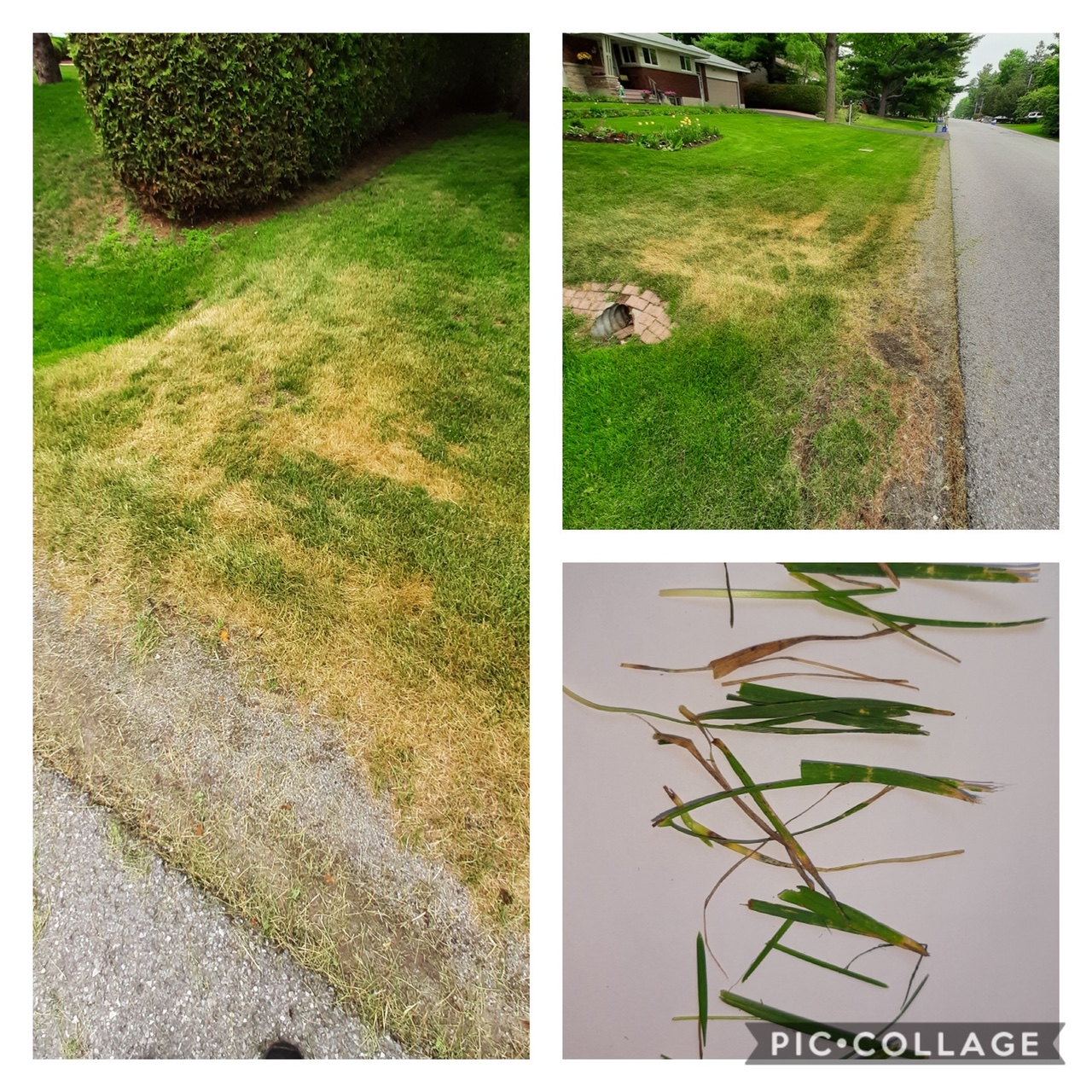 Extreme heat and dryness can lead to mower damage.