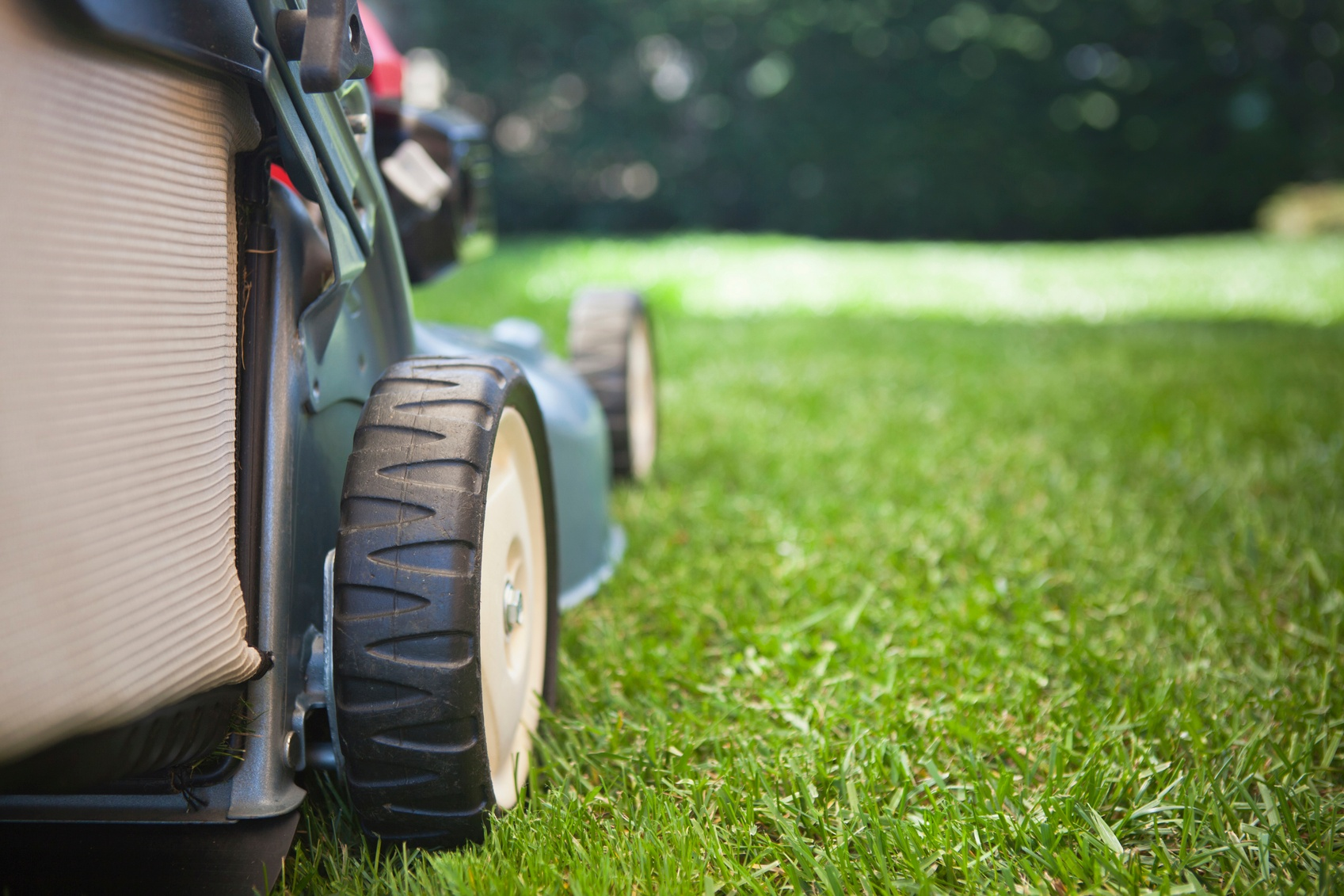 Dull mower blades rip and tear the blades of grass making the plant weak and susceptible to disease and other stresses.