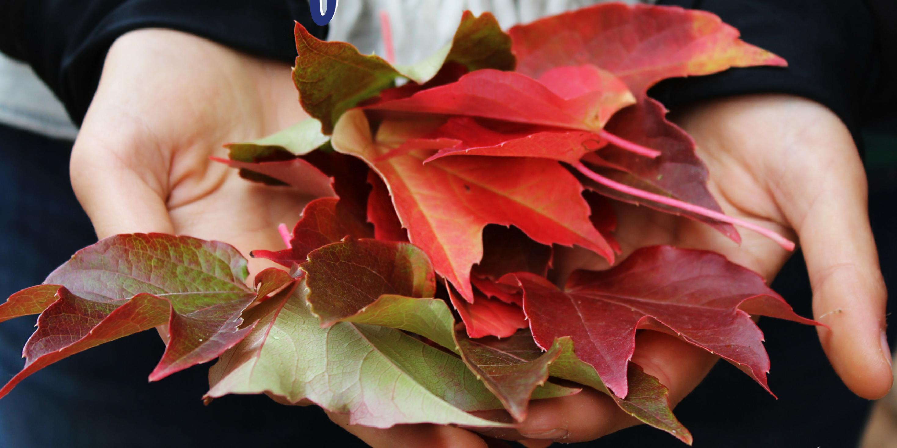 Shredded leaves are good for the flower bed