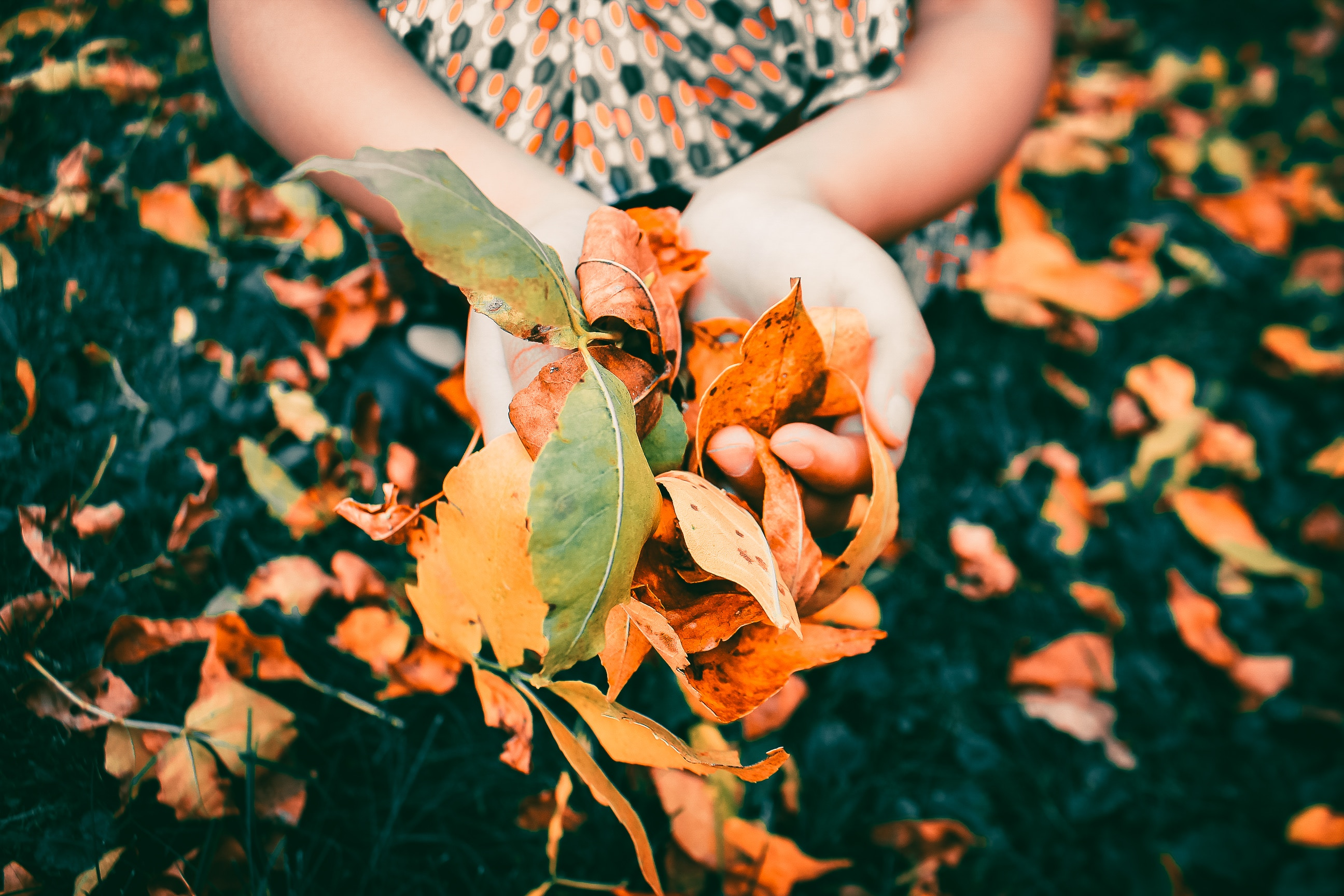 With Mother Nature giving us optimal growing conditions right now, fall is the ideal time to reseed your lawn.