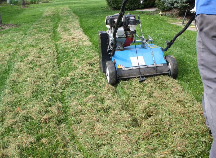 Lawn thatch is a tight, fibrous layer of dead, living, and decaying organic matter.