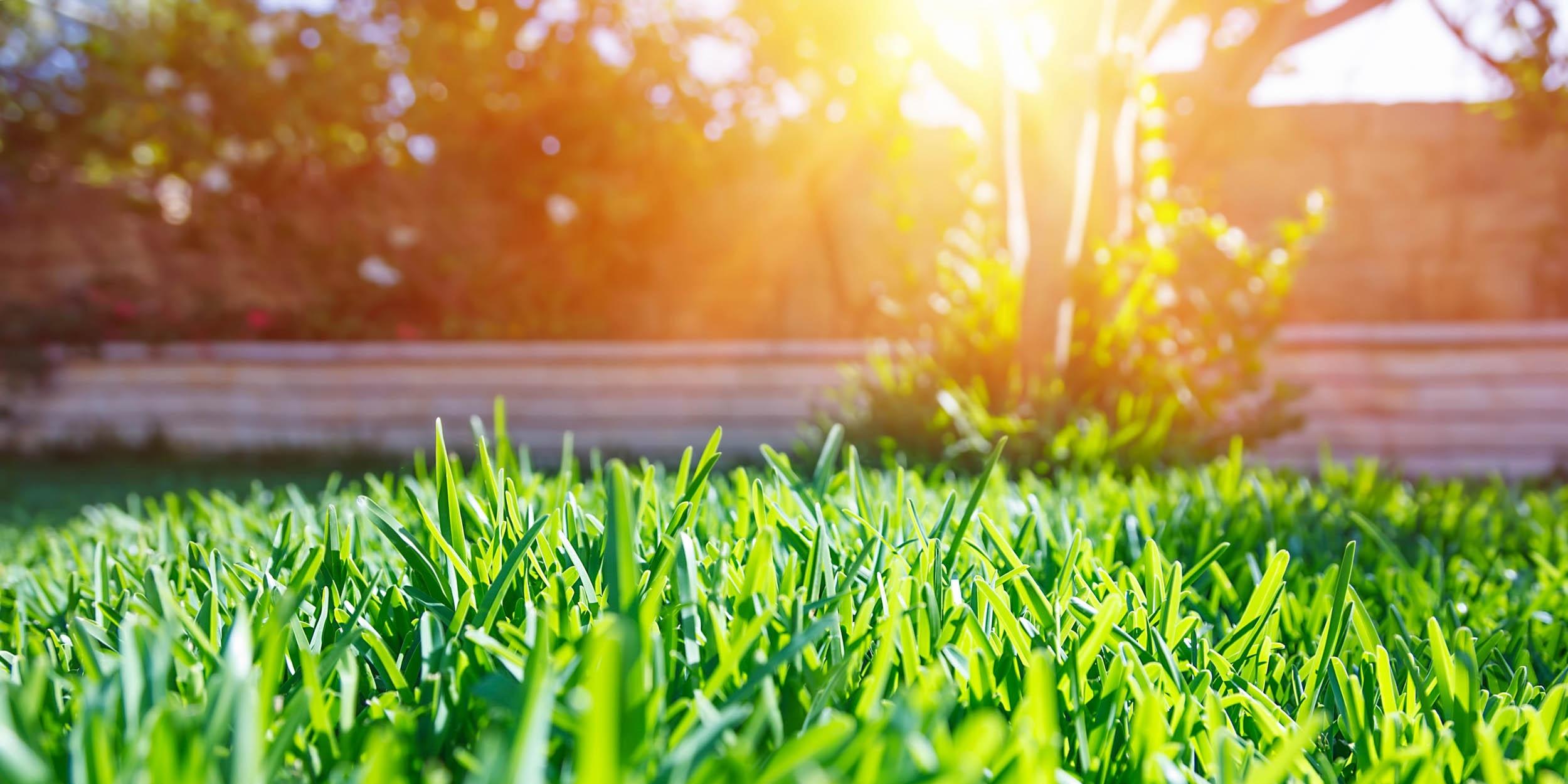 Nutri-Lawn will help.