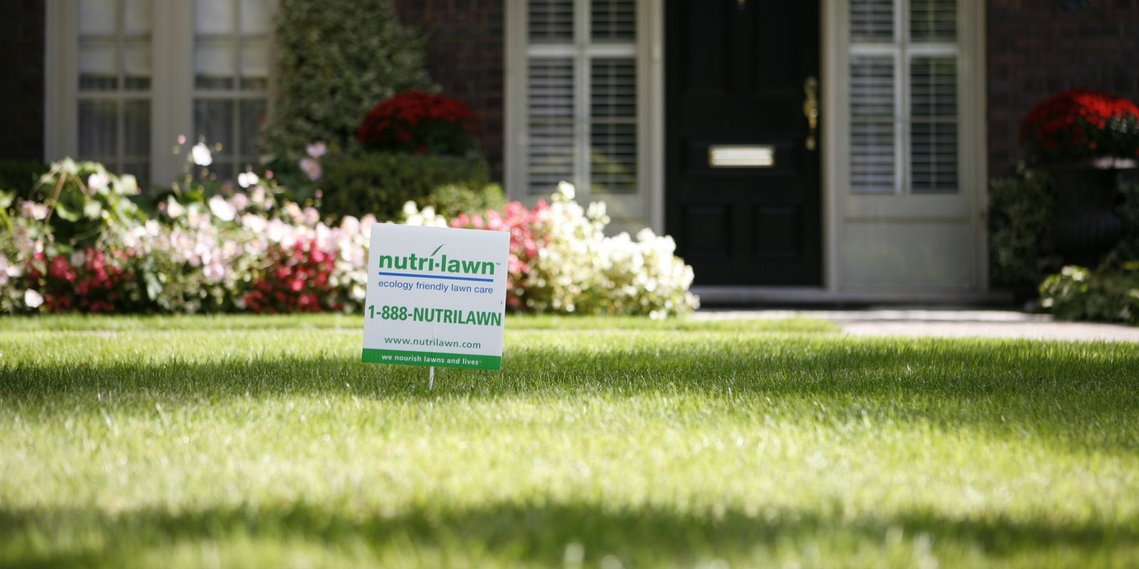 A healthy lawn is better able to defend itself against weeds and moss.