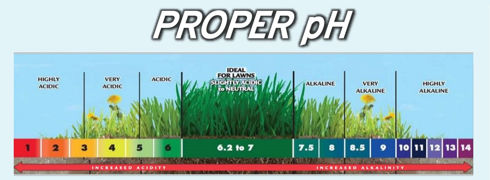 With all of our rain, it is going to take regular yearly applications of Calcitic Lime in order to give your lawn a fighting chance to have the pH more balanced.