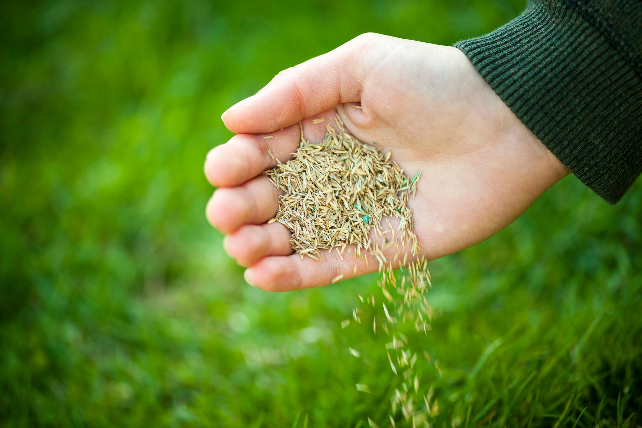 In order to get good results with any lawn seeding project, the seed must be in contact with soil.