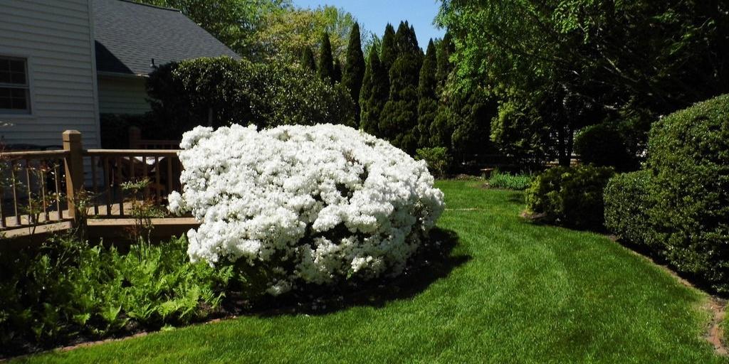 prune-landscaping-curb-appeal.jpg