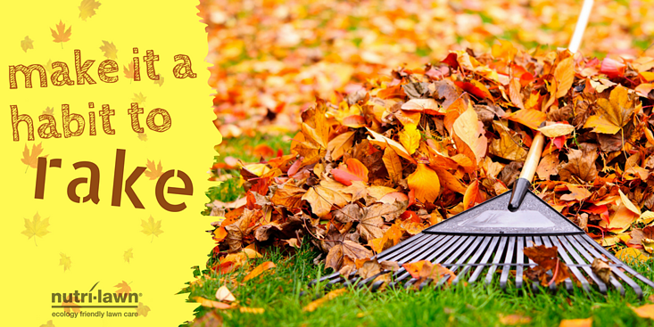 If you have the space, you can compost the leaves.