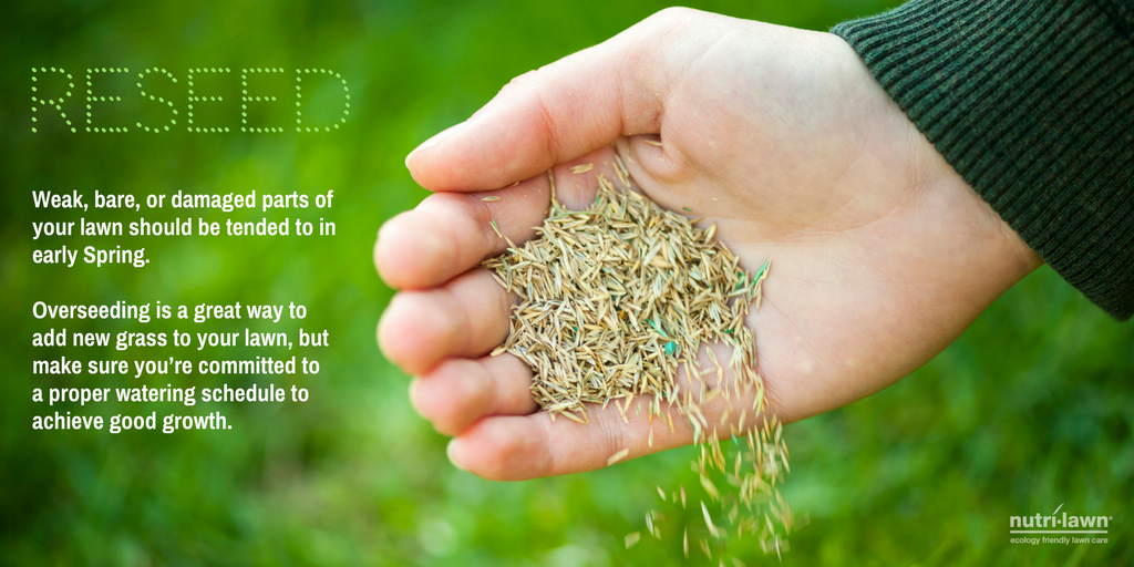 Seeding is a great way to freshen up the lawn, and give it a much need minor renovation.