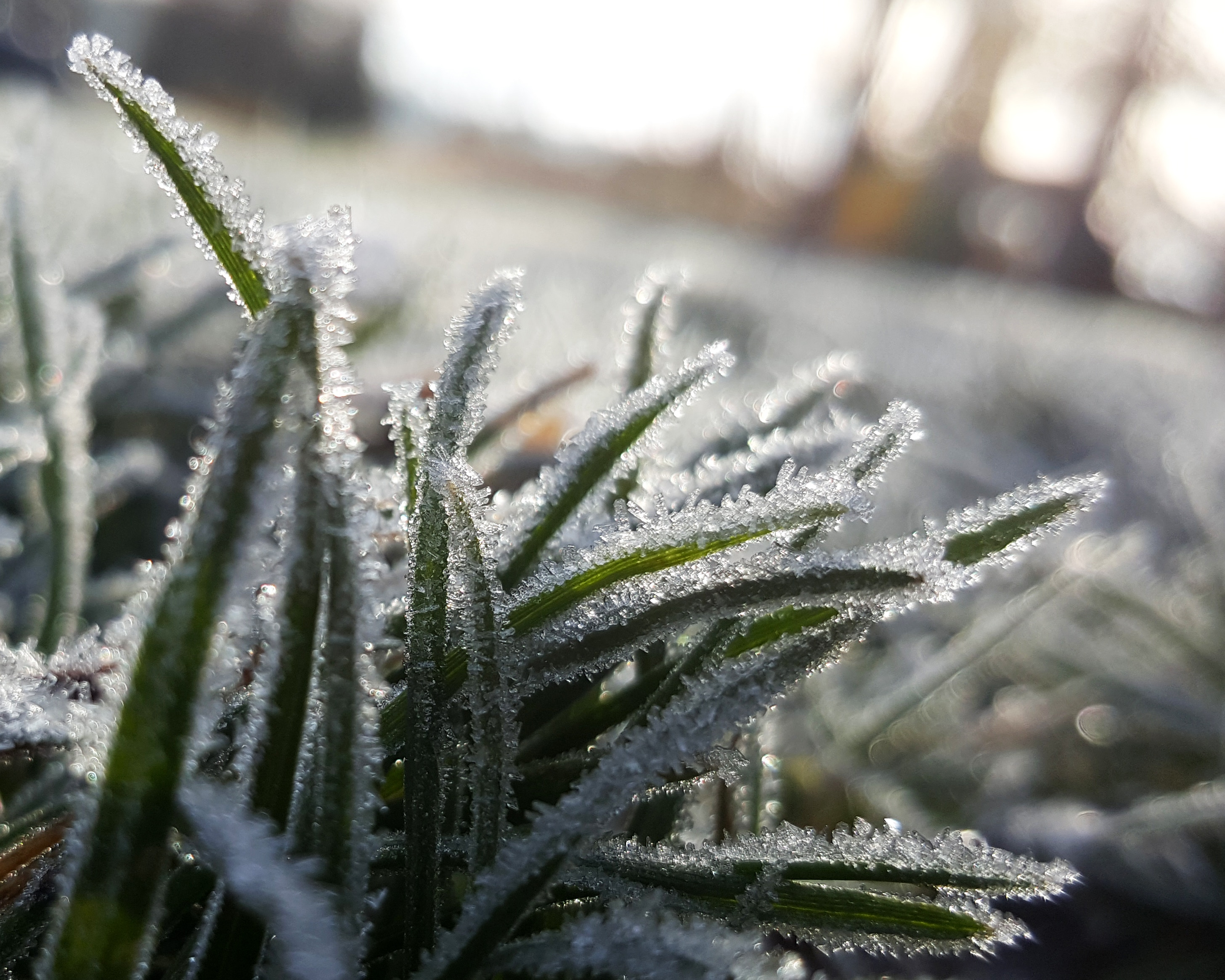 In certain parts of Canada, you may start to see frost on your lawn.