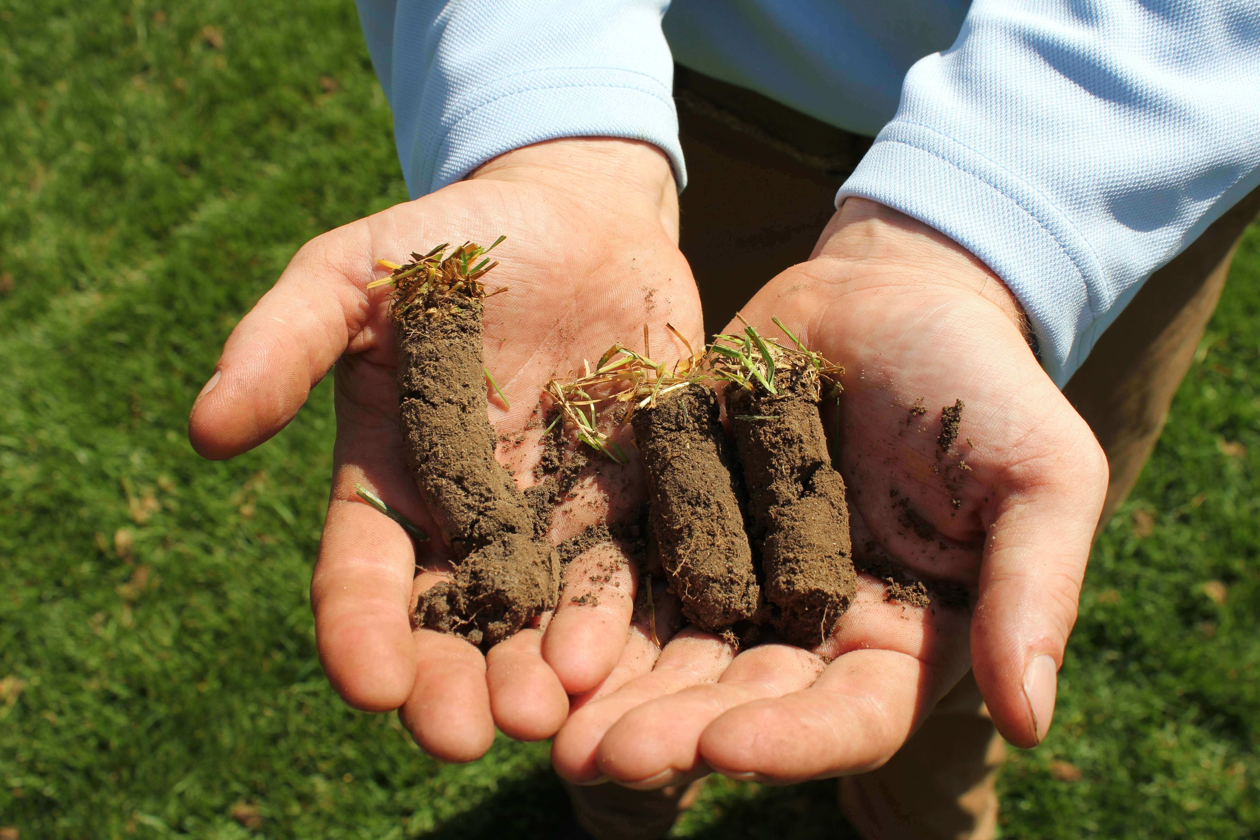 By aerating your lawn annually the thatch layer is routinely broken up.