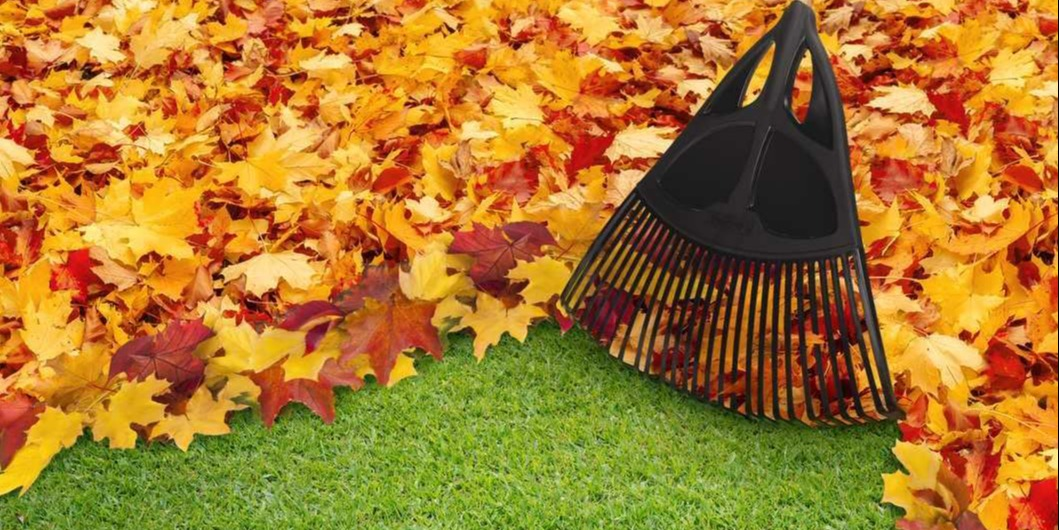 Raking should be a routine in fall.