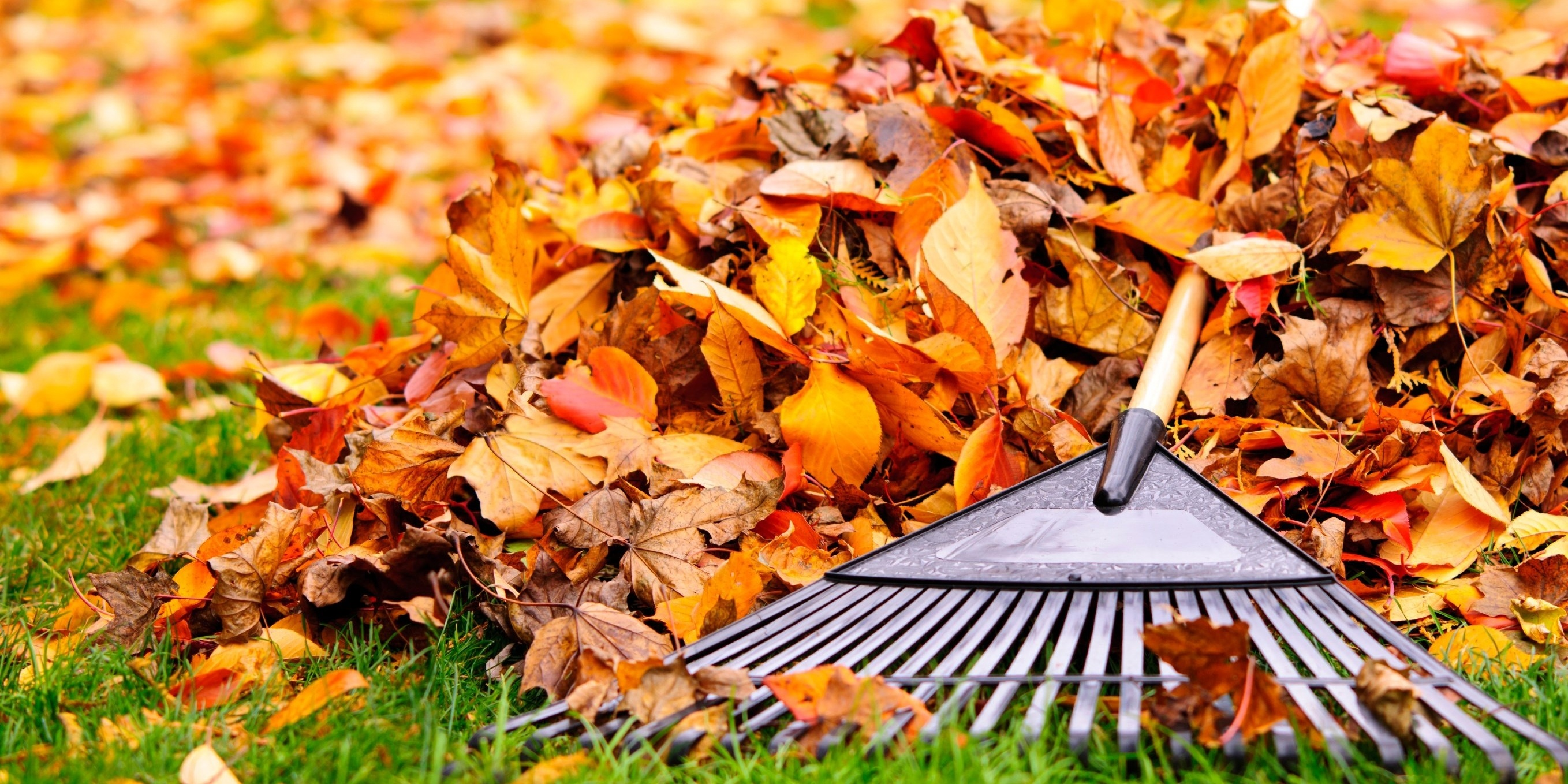 Letting leaves accumulate is potentially damaging to your grass blades, since you're restricting the amount of sunlight they need to build winter hardiness.