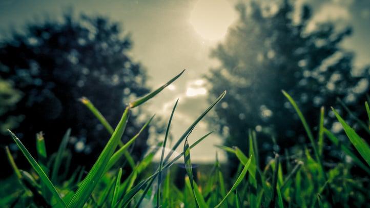 summer-grass.jpg