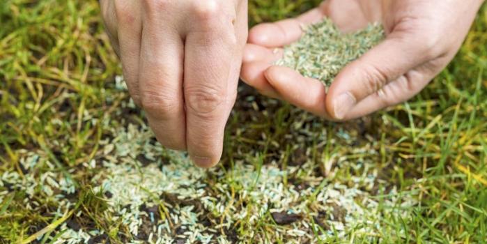 spot-hand-seeding.png