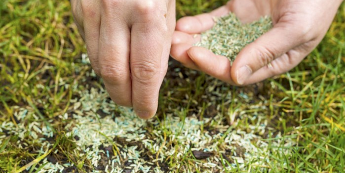 Small areas no larger than the size of your hand can be spot seeded.
