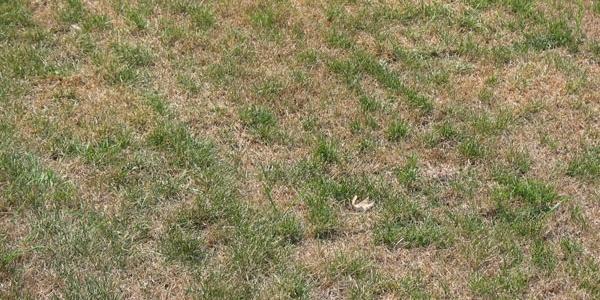 summer-drought-dormant-lawn.jpg