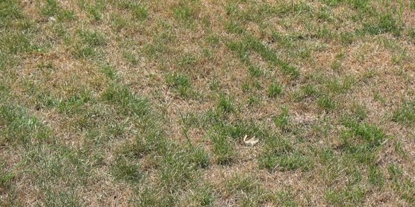 summer-drought-dormant-lawn.jpg