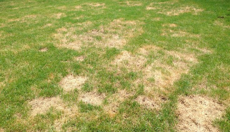 Summer stress can leave lawns brown and dry.