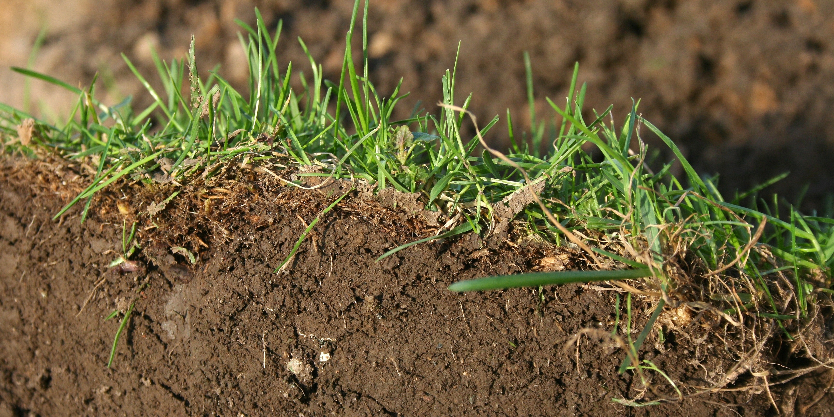 When left untreated, too much thatch can be detrimental to the success of your lawn.