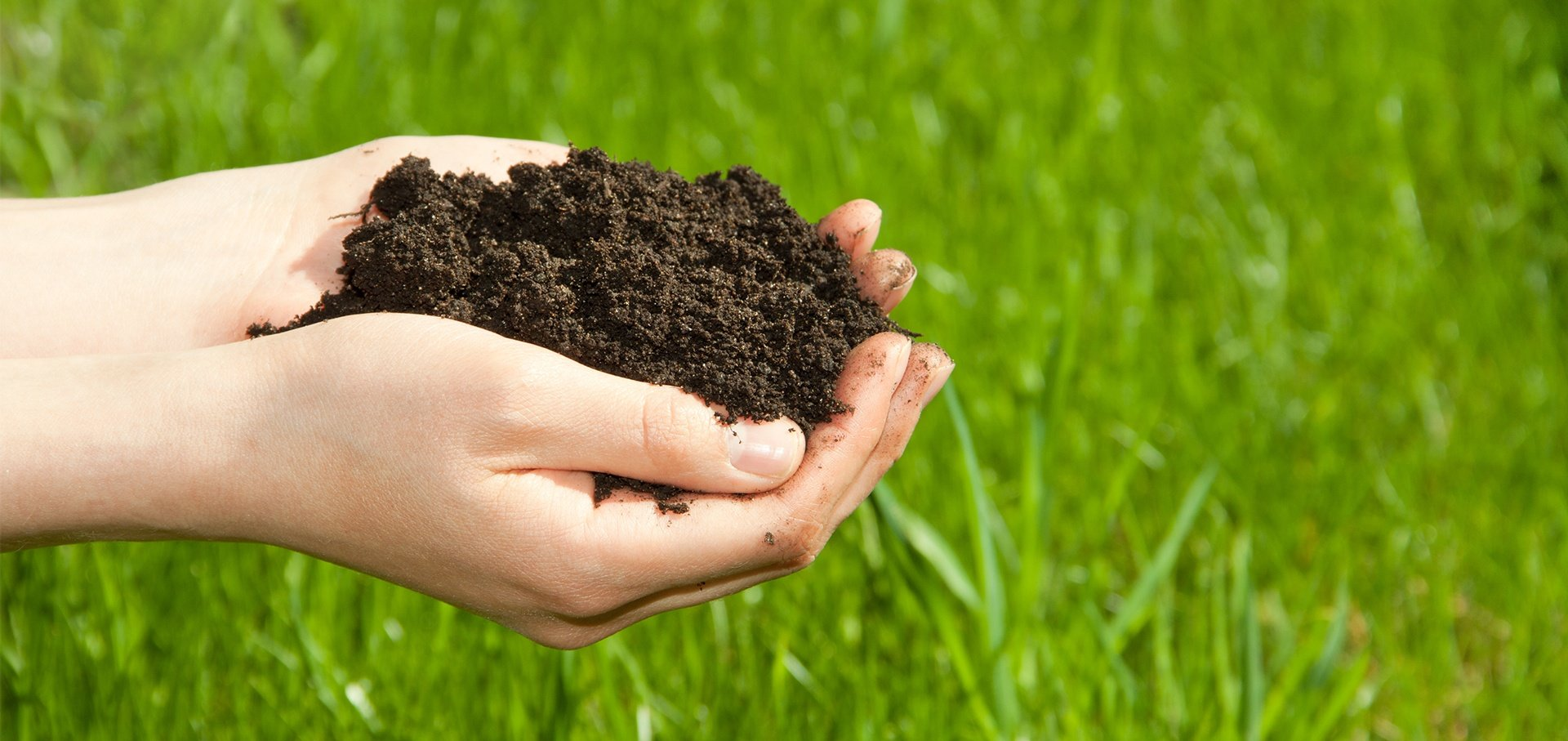 Just like the human body, your lawn needs a certain amount of nutrients to function properly.