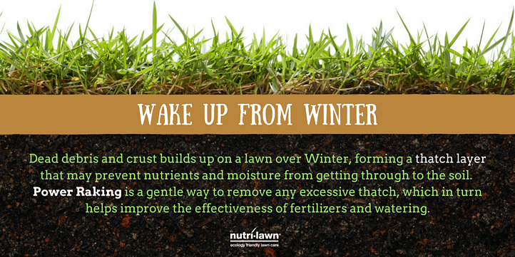 Unlike dethatching, power raking doesn't cause extensive damage, so the lawn recovers rapidly and maintains its density.