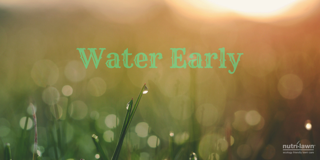 water early (twitter).png