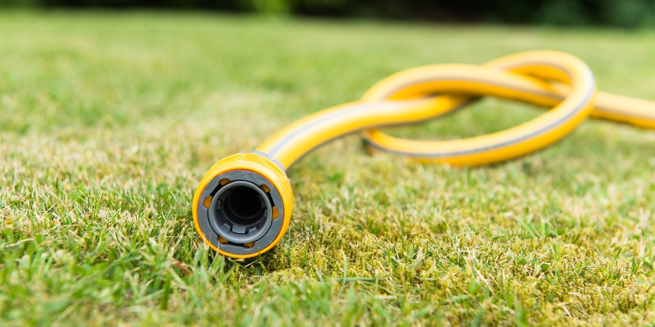 Watering deep and infrequent encourages grass roots to grow deeper into the soil.