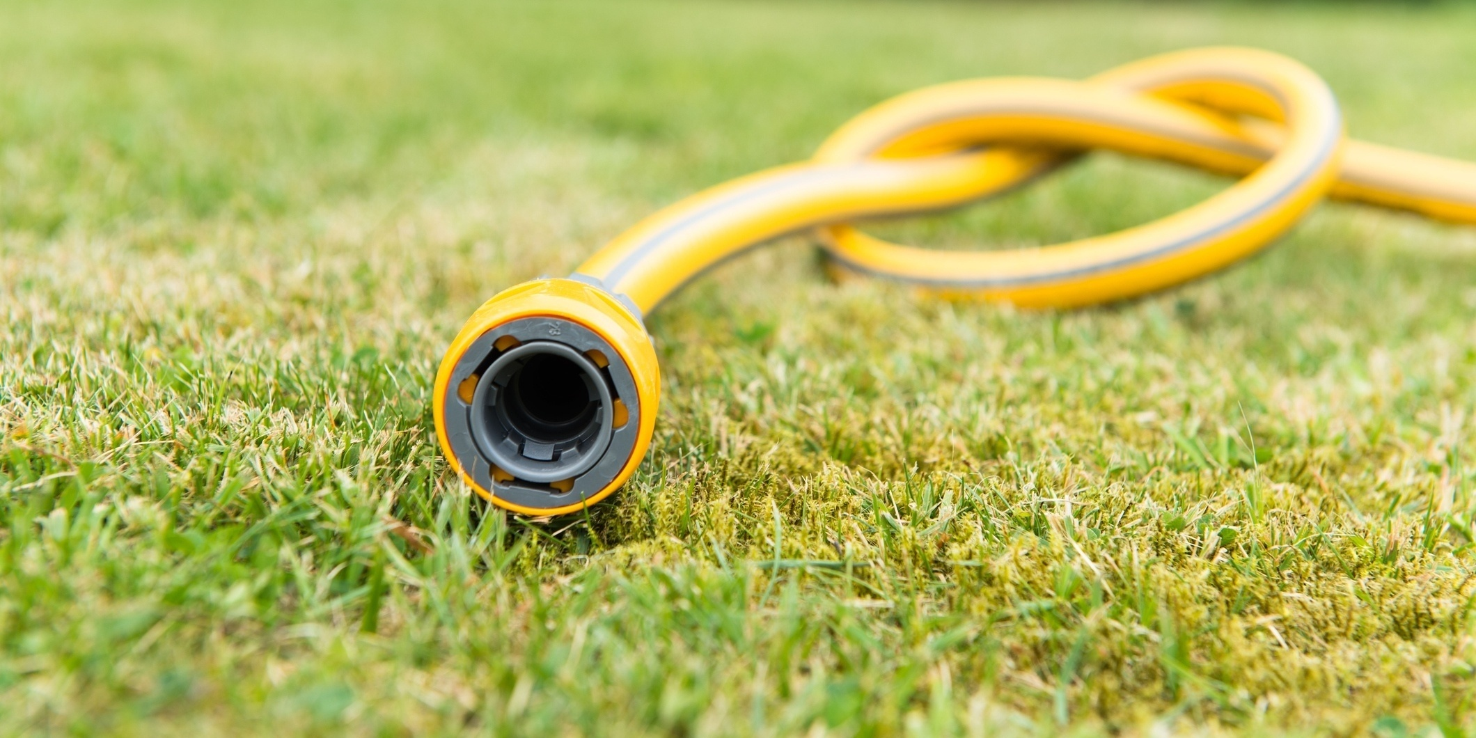 Increase watering in drought conditions.