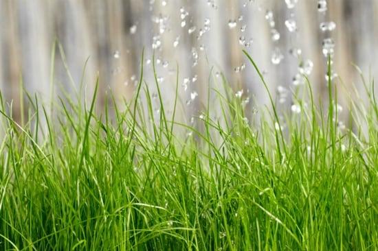 watering-grass-3