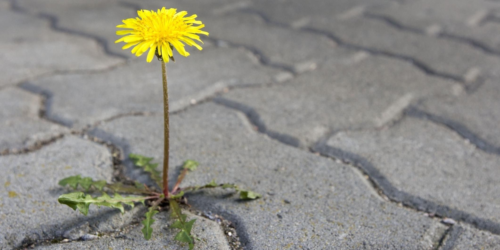weed-control-curb-appeal.jpg