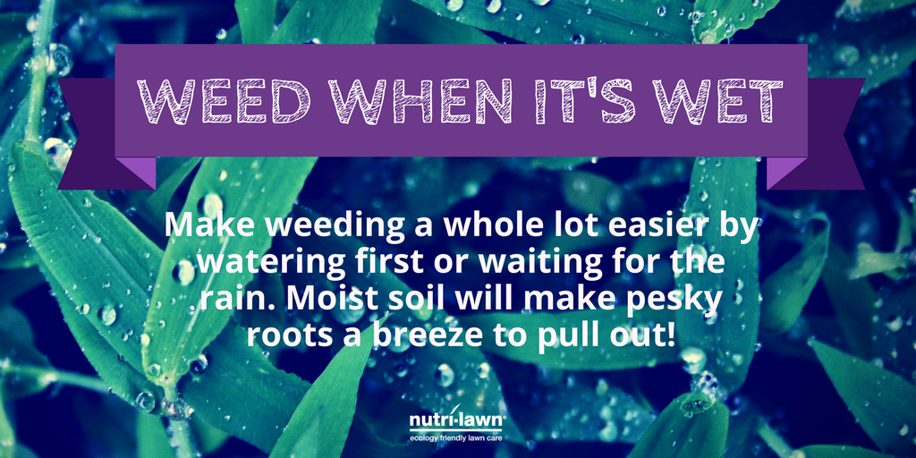 Hard to control weeds present more of a challenge to effectively eliminate.