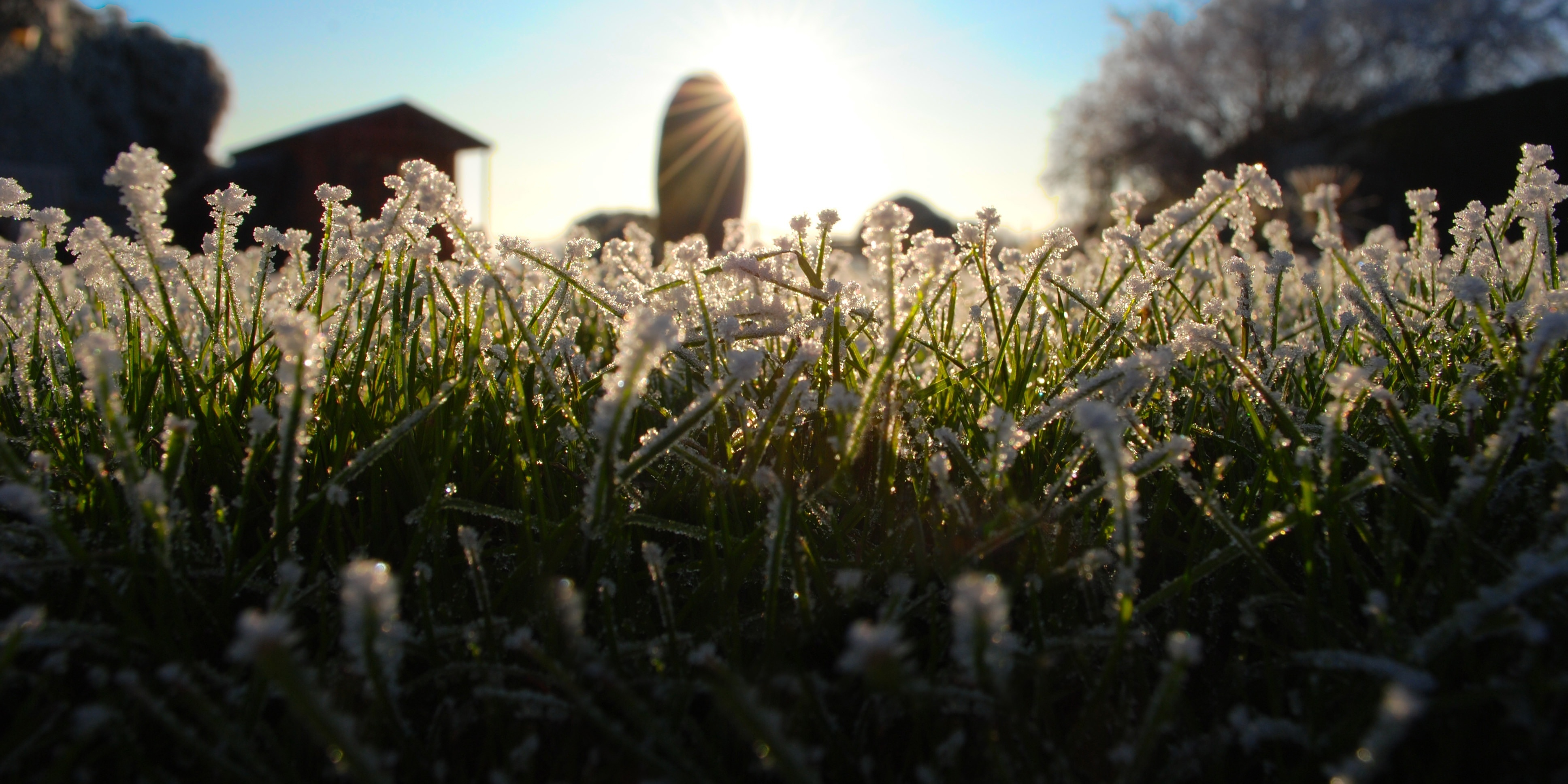 Stay off your frosted grass until the sun melts it away.