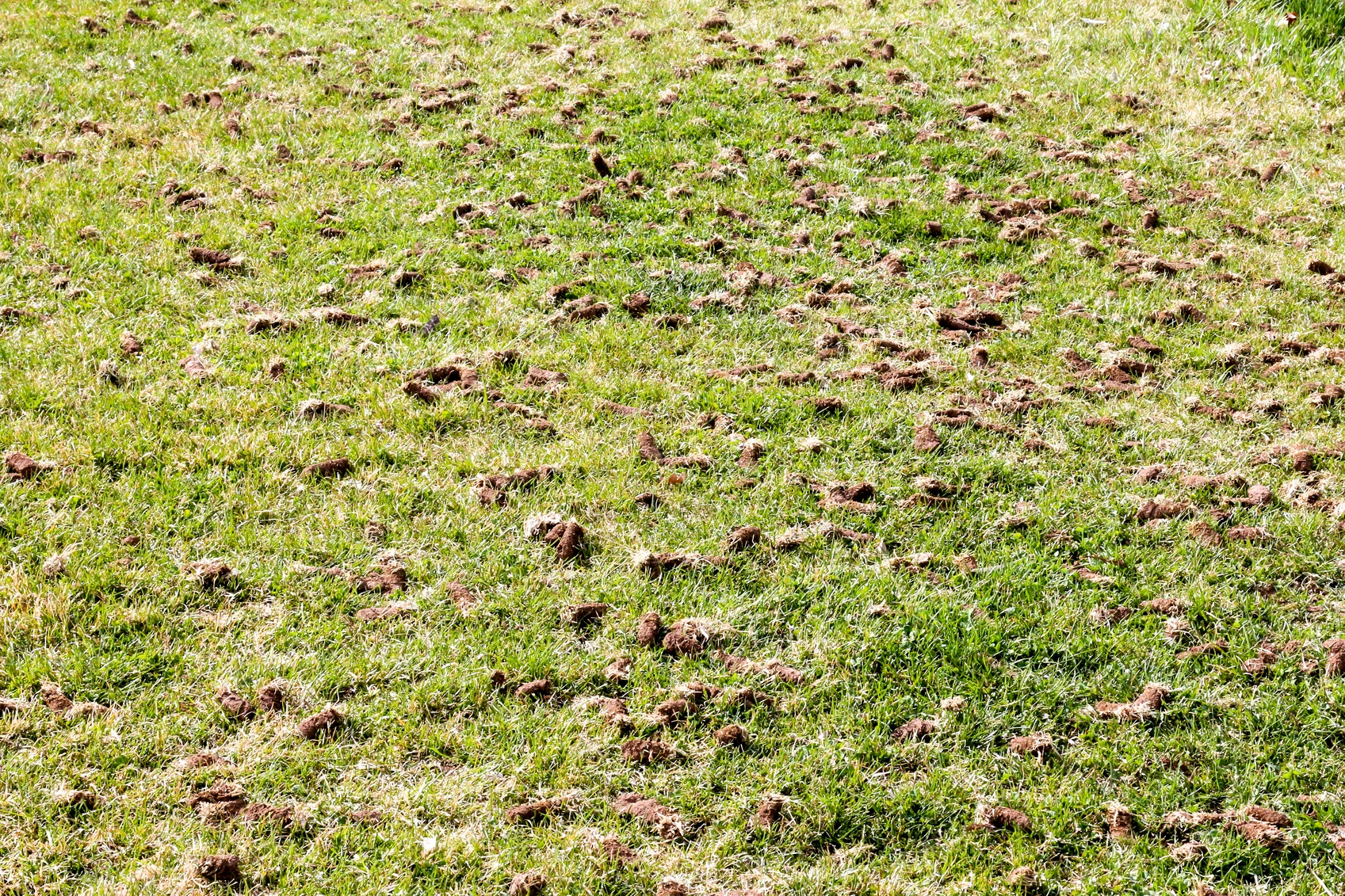 When Is the Best Time to Aerate and Overseed in Vancouver? - Featured Image