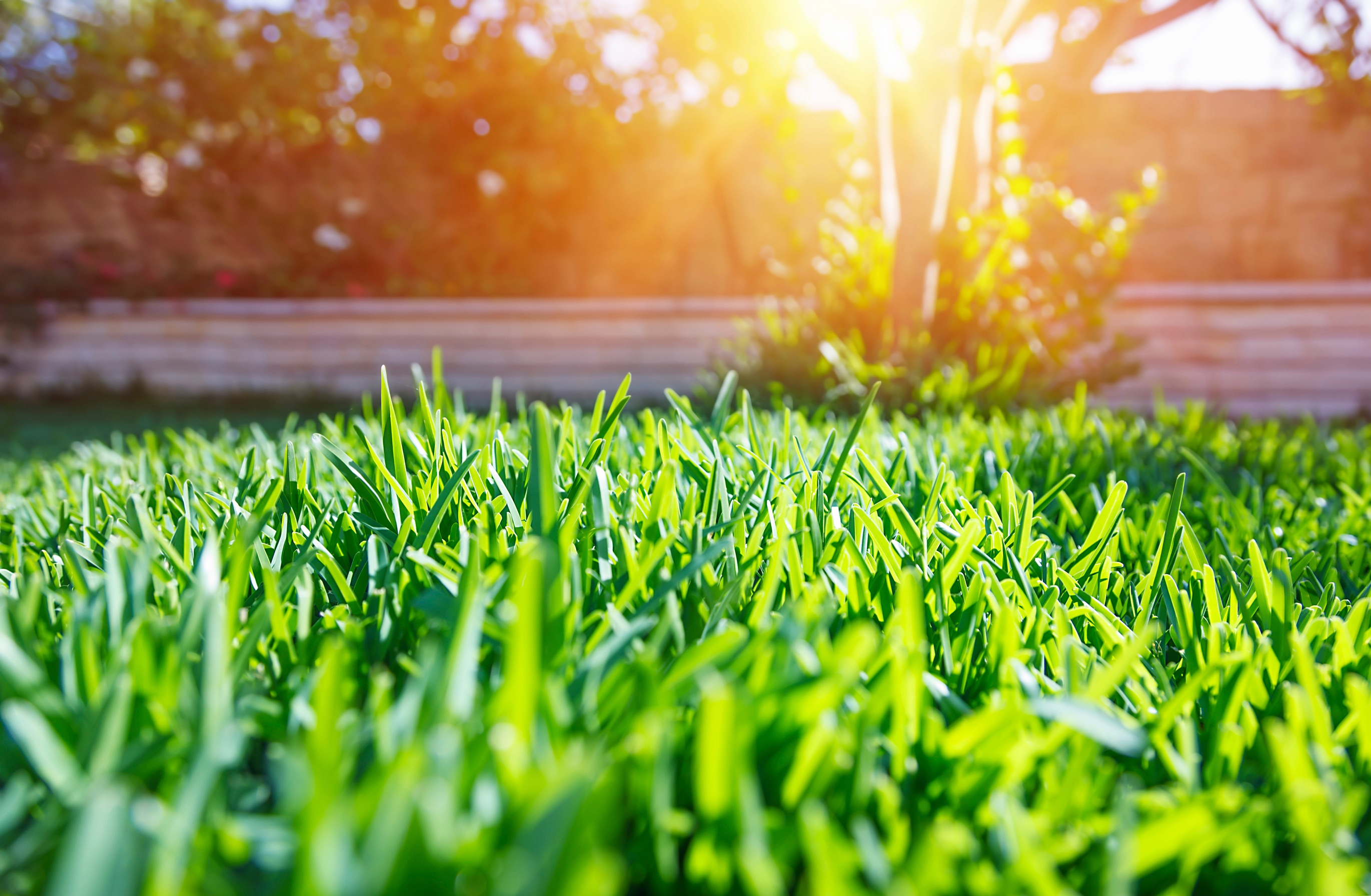 Preparing Your Lawn For Summer Stress - Featured Image