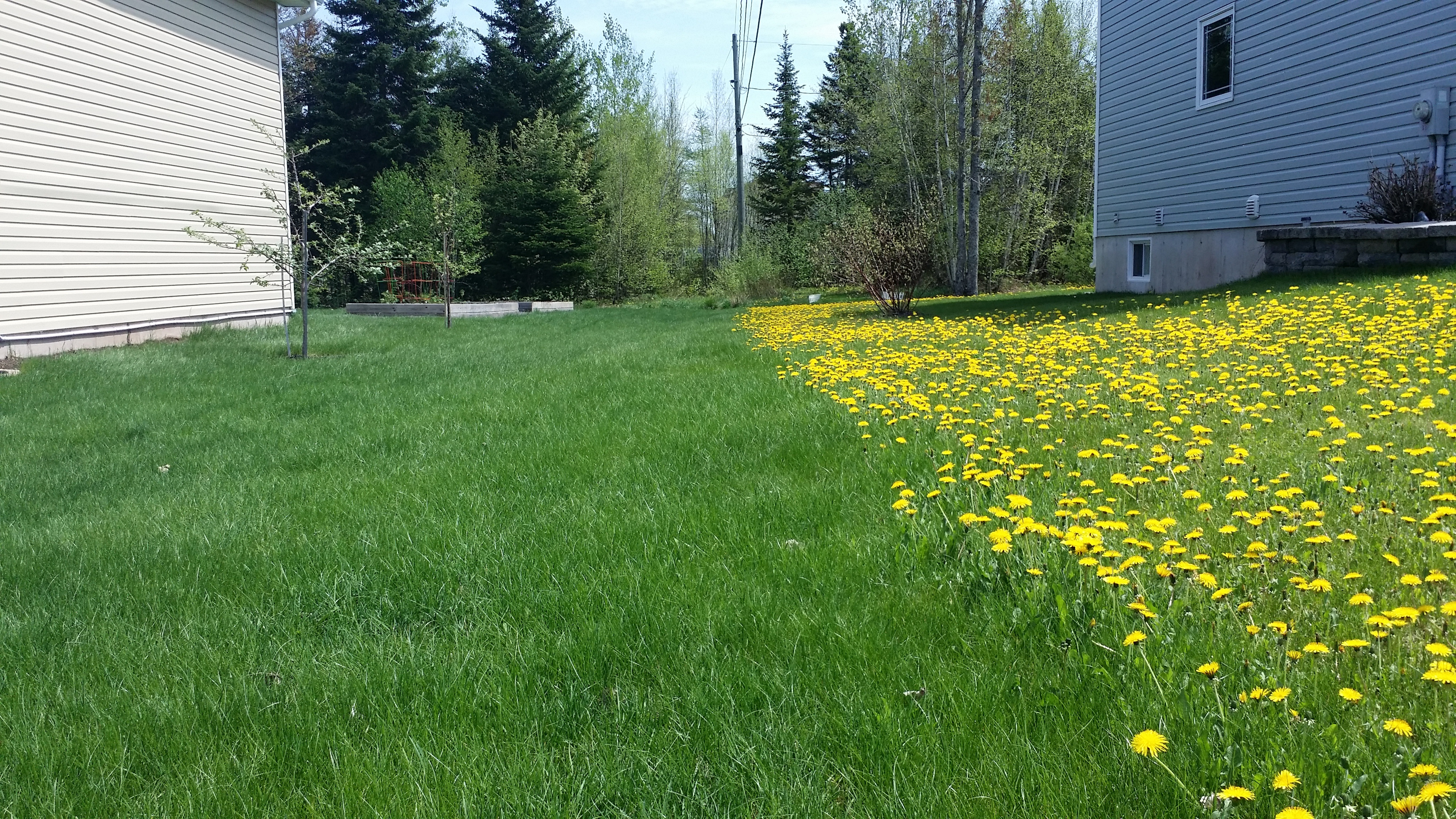 Fiesta Weed Control: Does It Work? - Featured Image