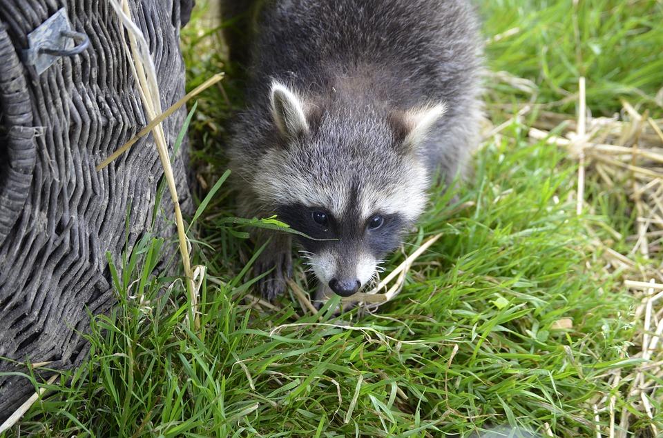 Grub Talk: Keeping Animals Away - Featured Image