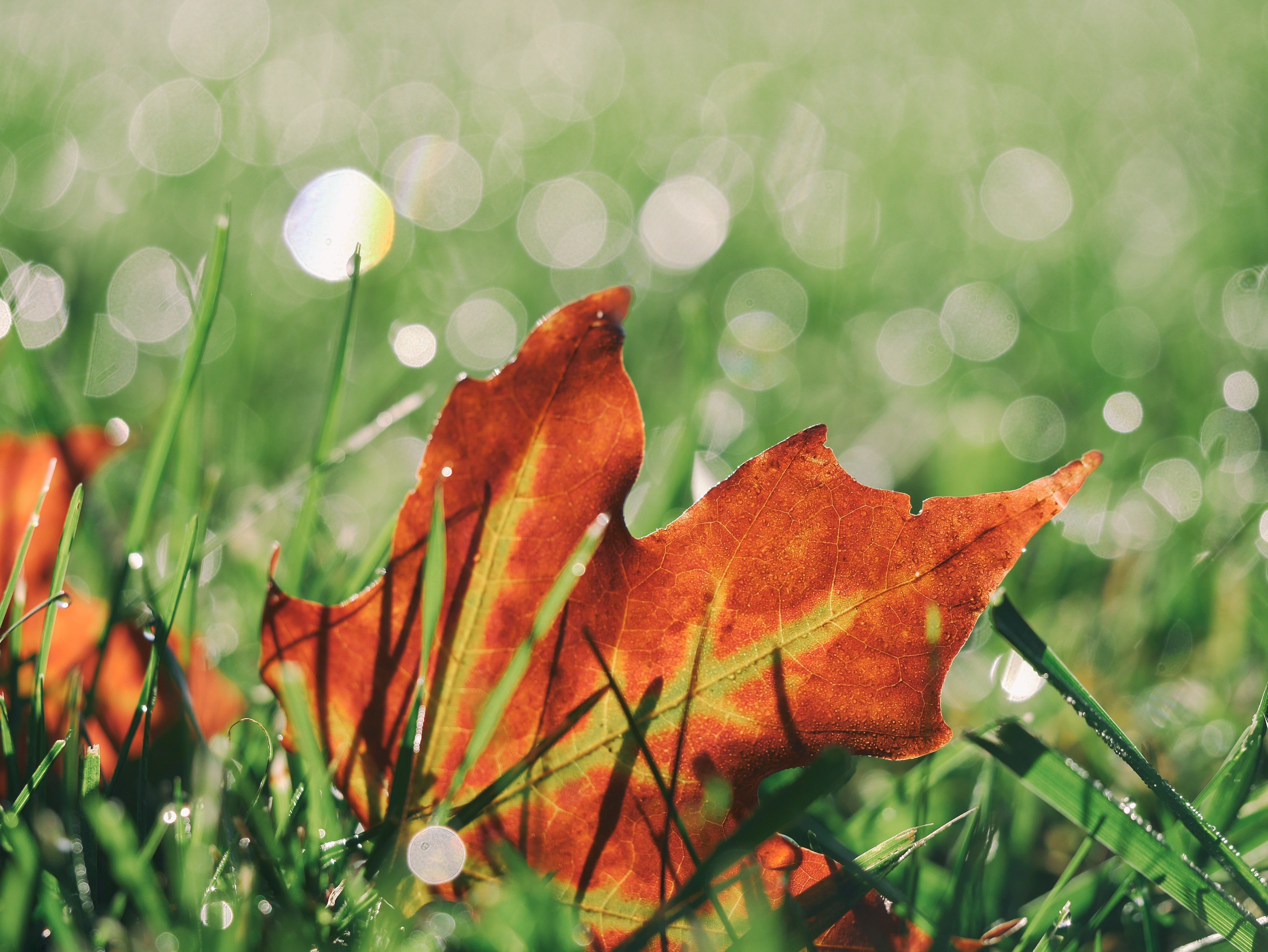 Fall Aeration and Overseeding - Featured Image