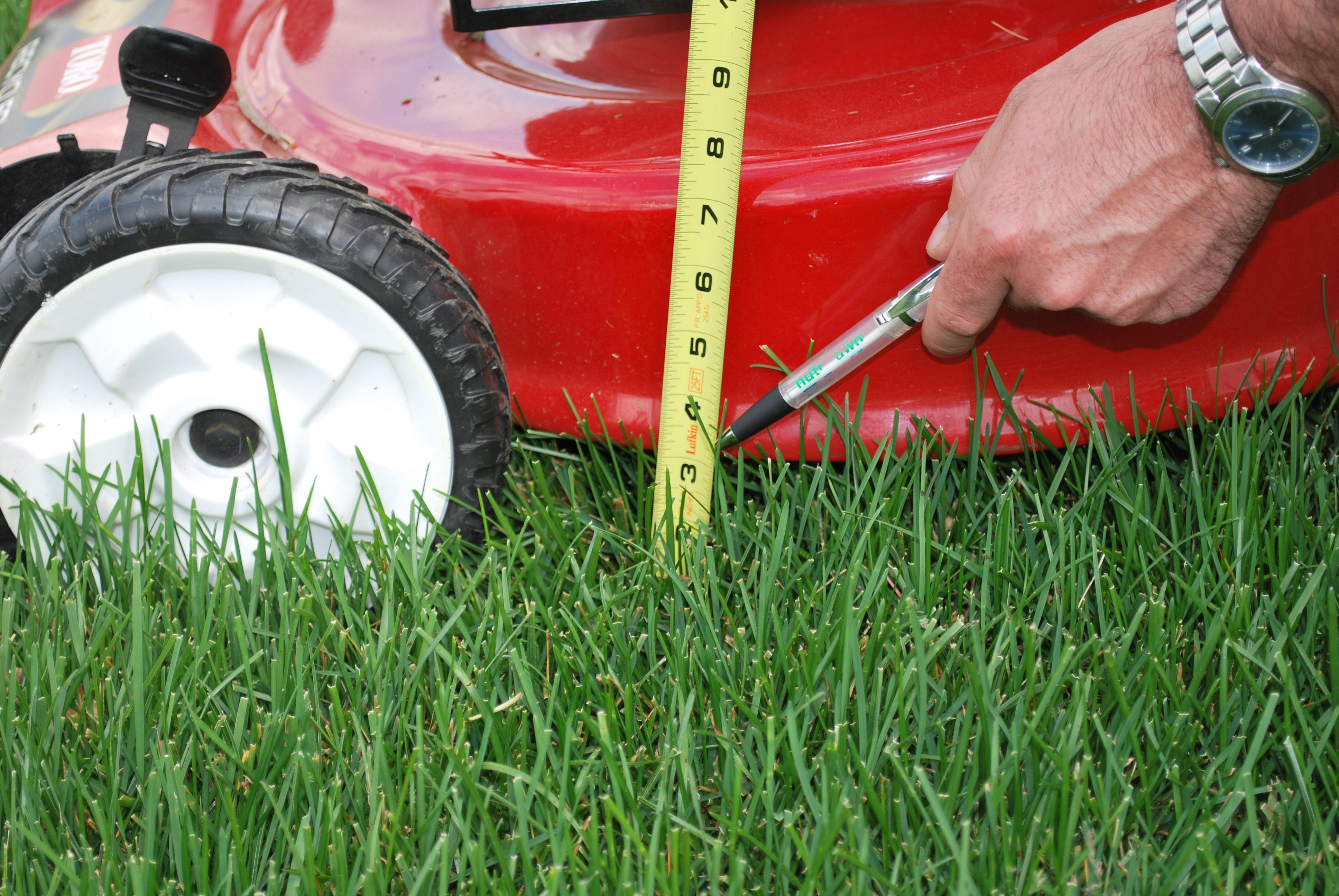 best-practices-for-lawn-mowing.jpg