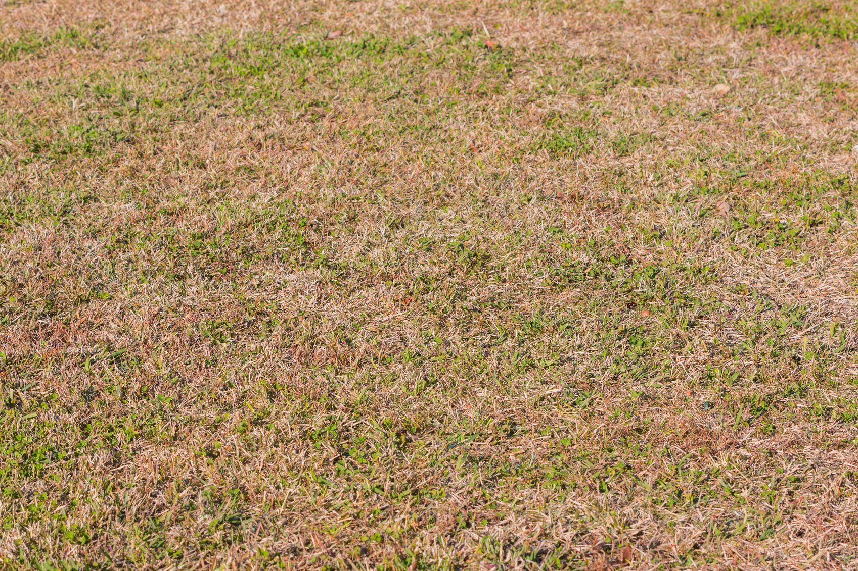 Learn More About Your Dormant Lawn - Featured Image