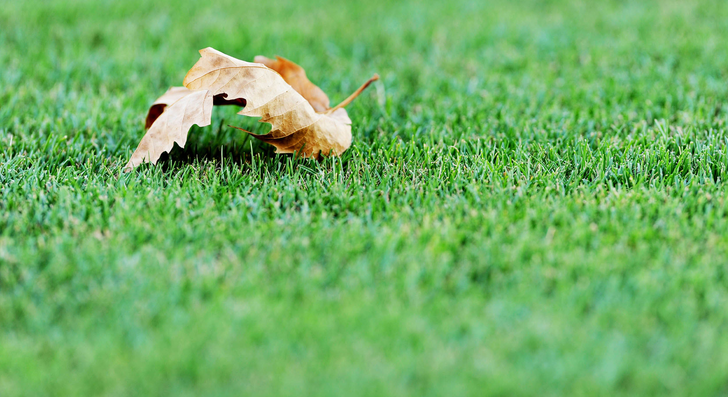 Aerating and Overseeding Your Lawn In Fall - Featured Image