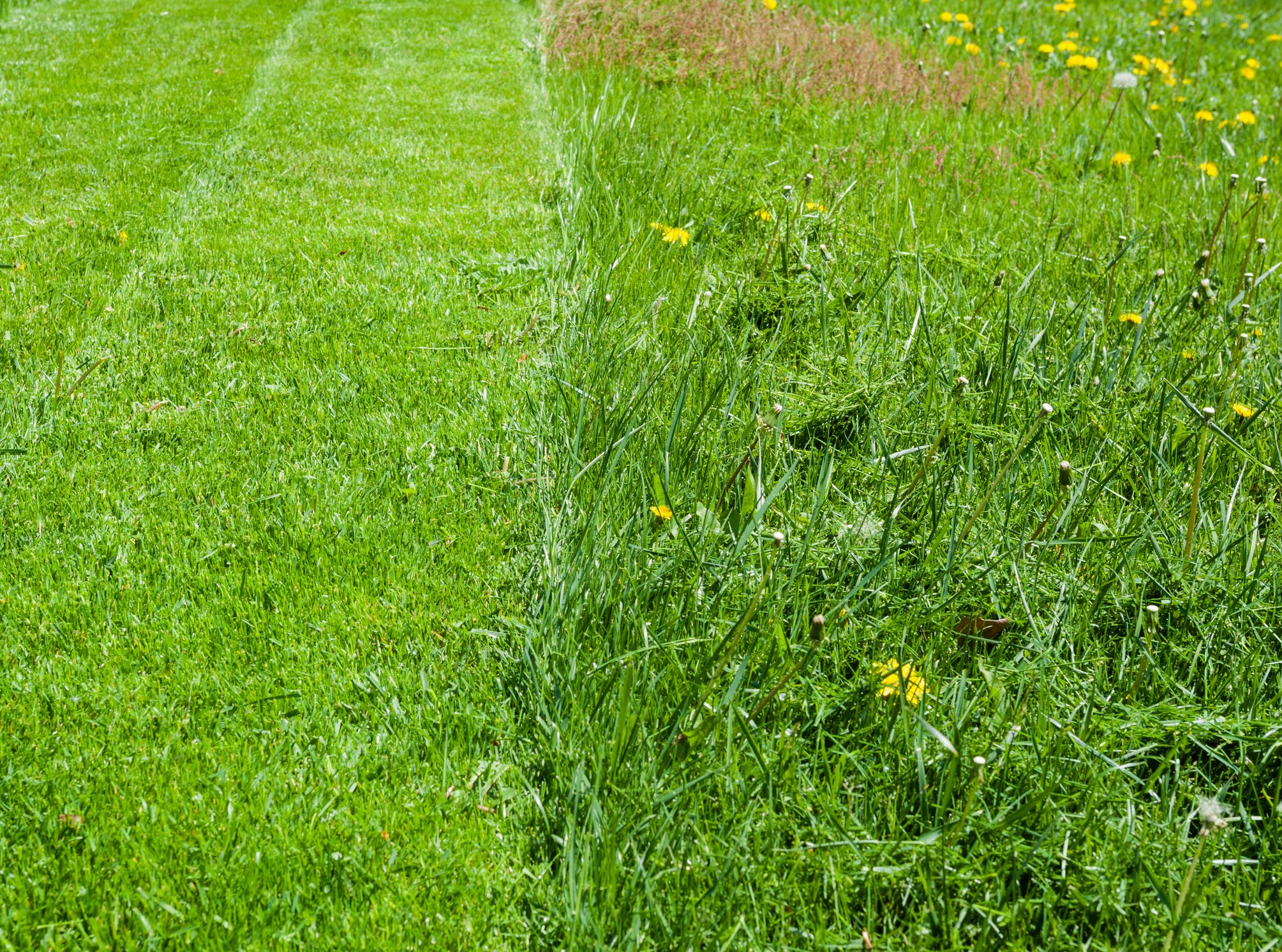 Fiesta Weed Control: Does It Work For Your Lawn? - Featured Image
