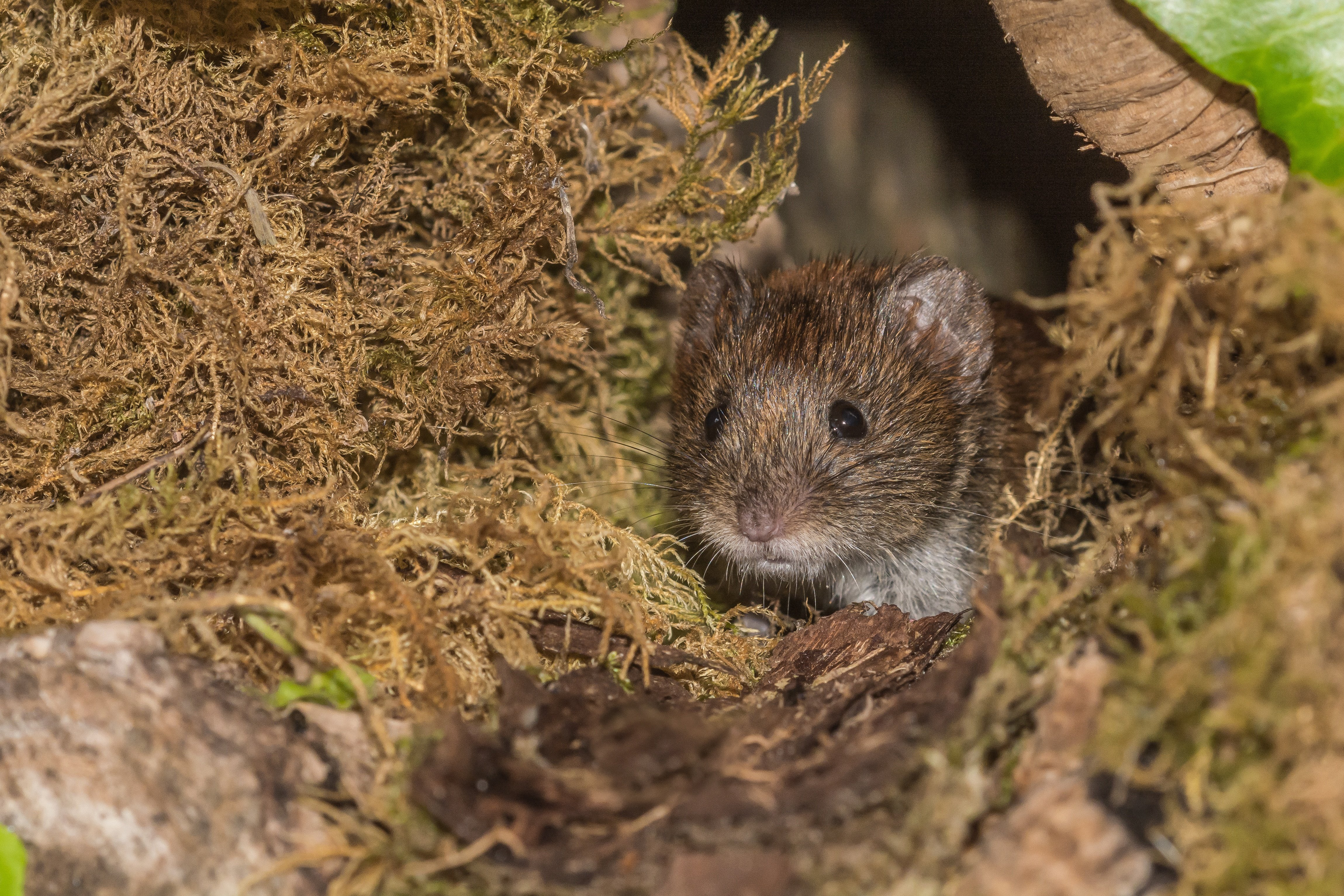What Is Vole Damage? - Featured Image