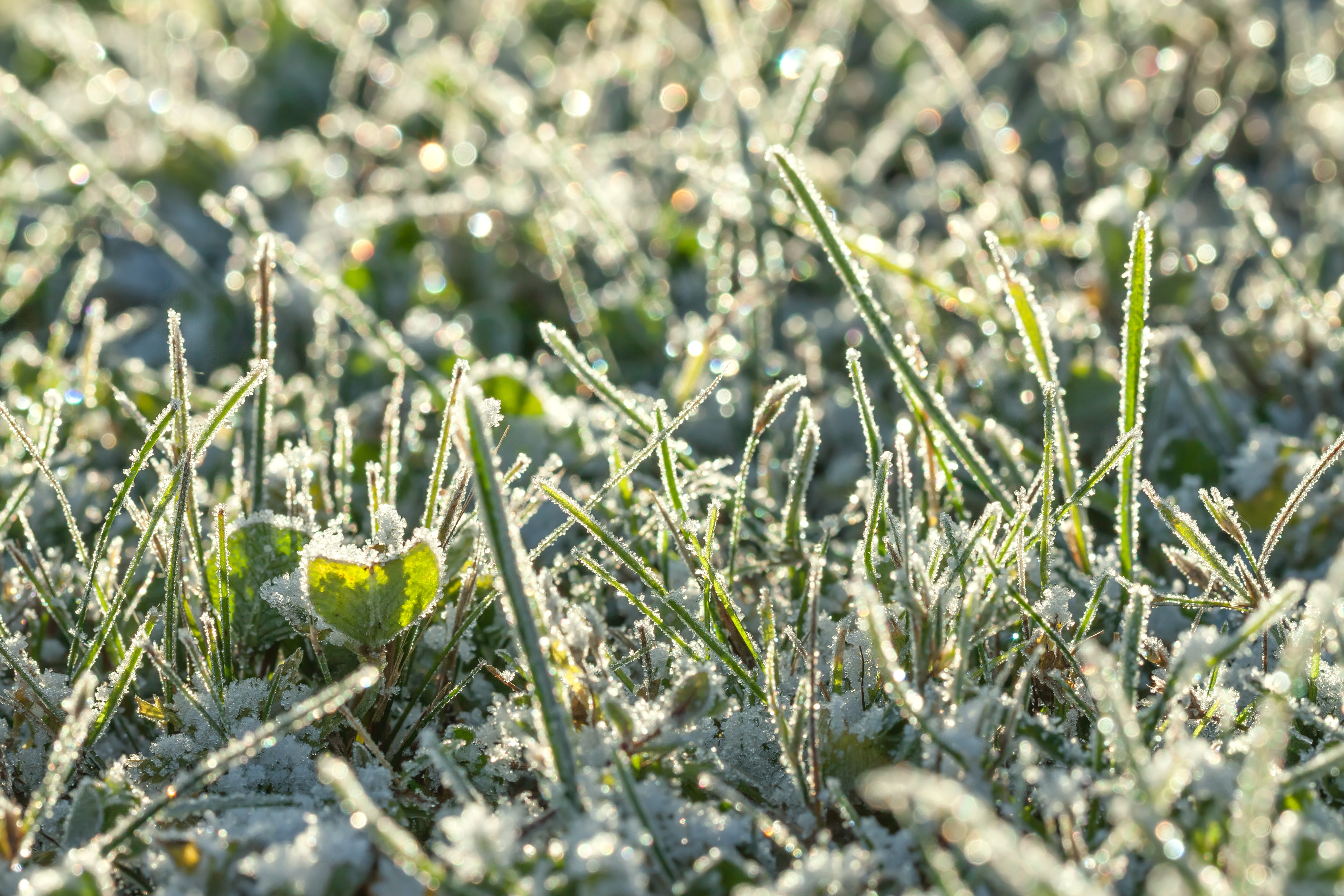 How Does Ice Damage Affect Your Lawn? - Featured Image