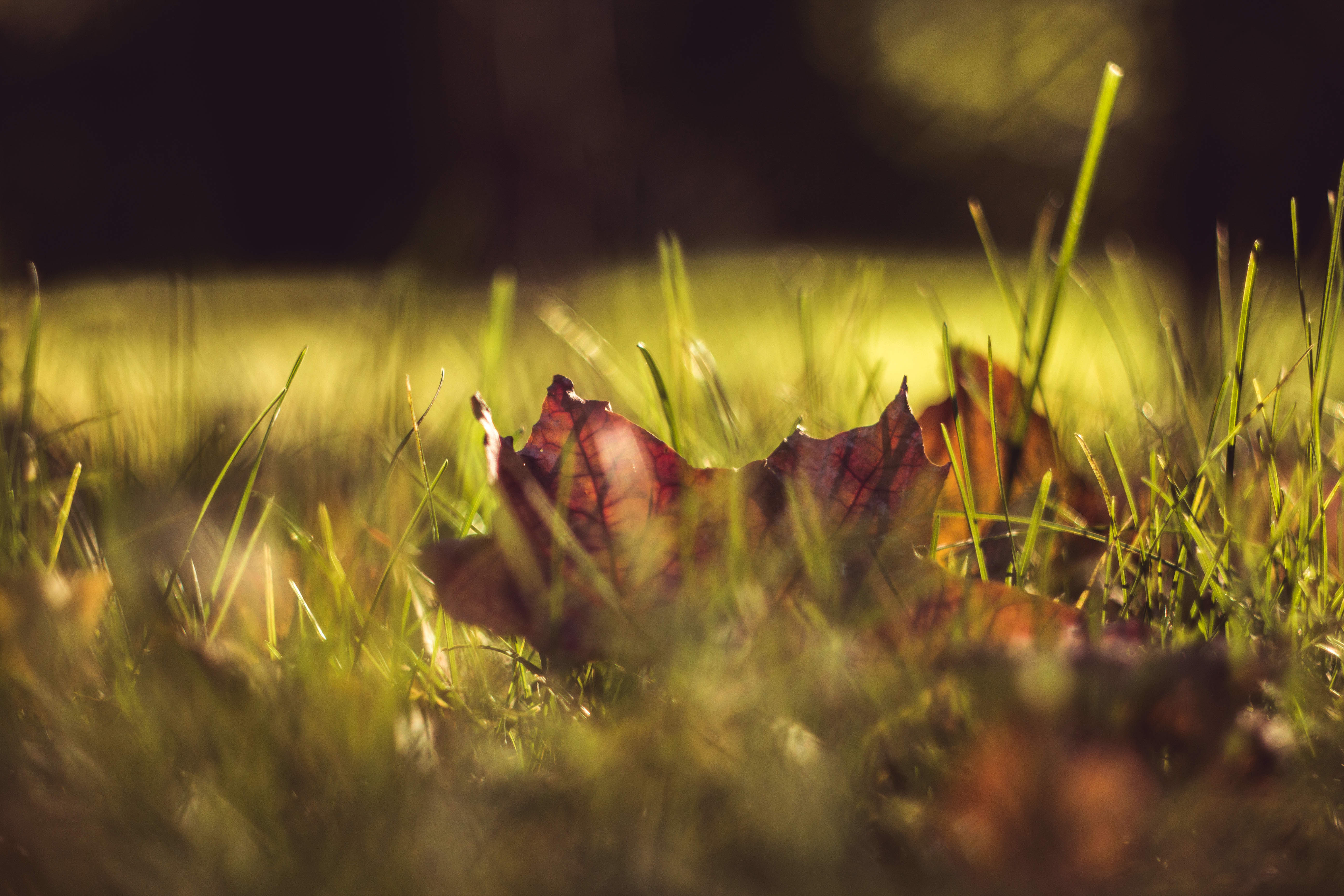 Fall Lawn Care Is All About Timing - Featured Image