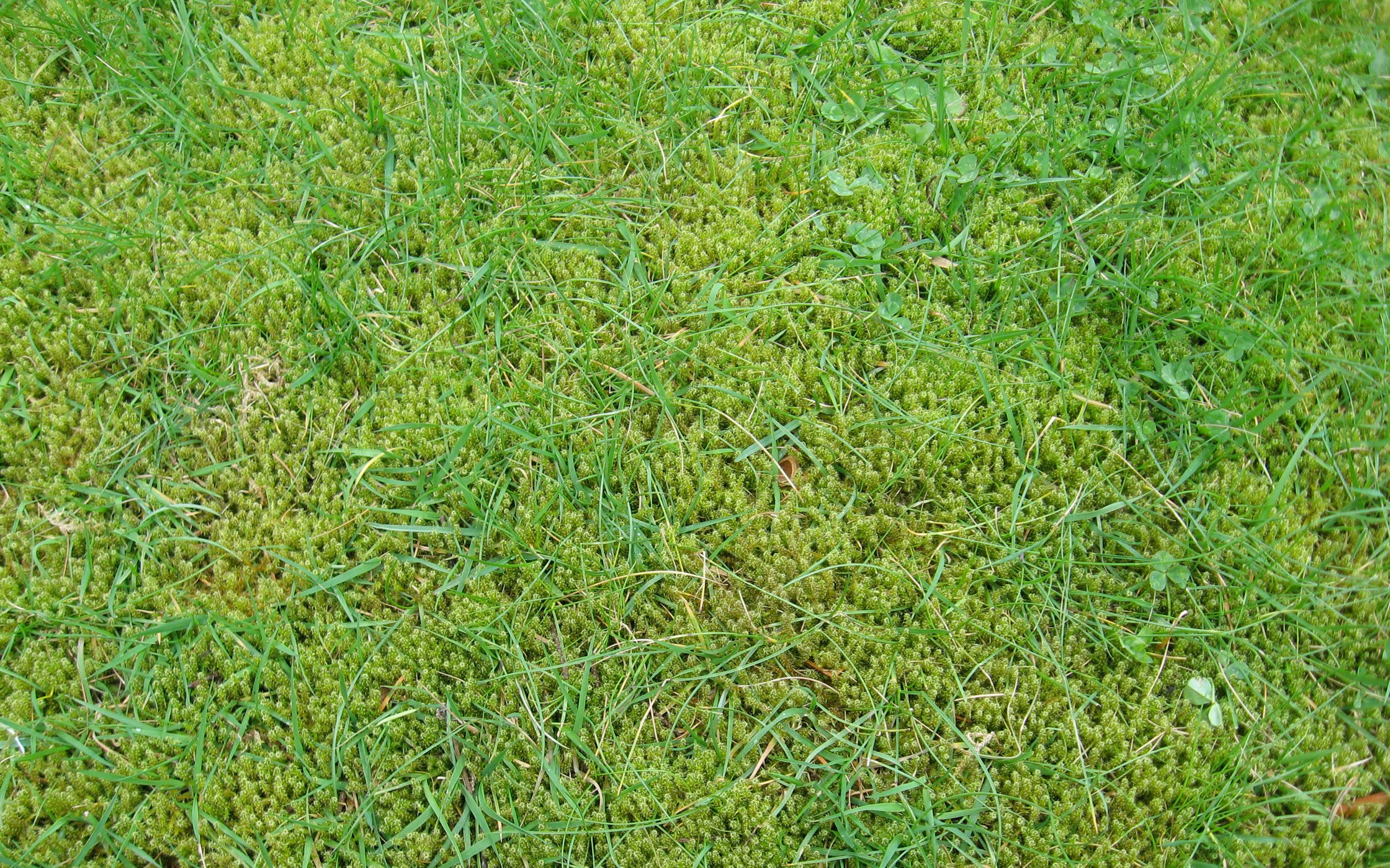 3 Reasons You Might Have Moss In Your Lawn - Featured Image