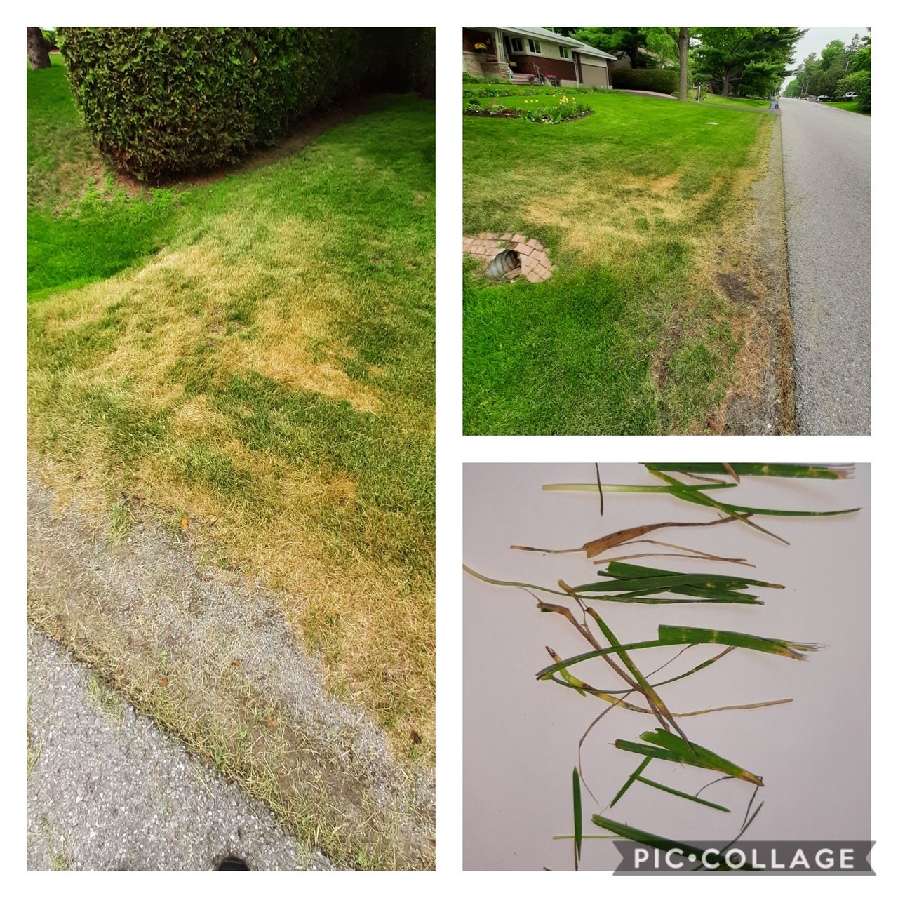 Quick Tips To Avoid Mower Damage - Featured Image
